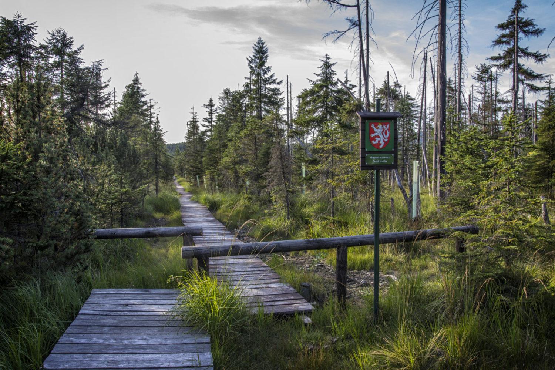 Přírodní rezervace Černá jezírka v Jizerských horách - dřevěný chodníček vedoucí přes rašeliniště