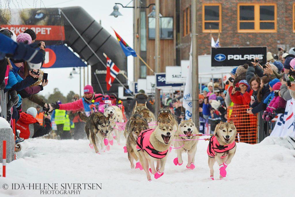 Závod psích spřežení - mushing
