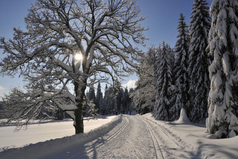 Zasněžená cesta a běžkařská stopa vedoucí lesem a krajinou Jizerských hor