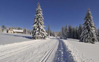Běžkařská stopa v Jizerských horách – zasněžené stromy a chalupa v dálce
