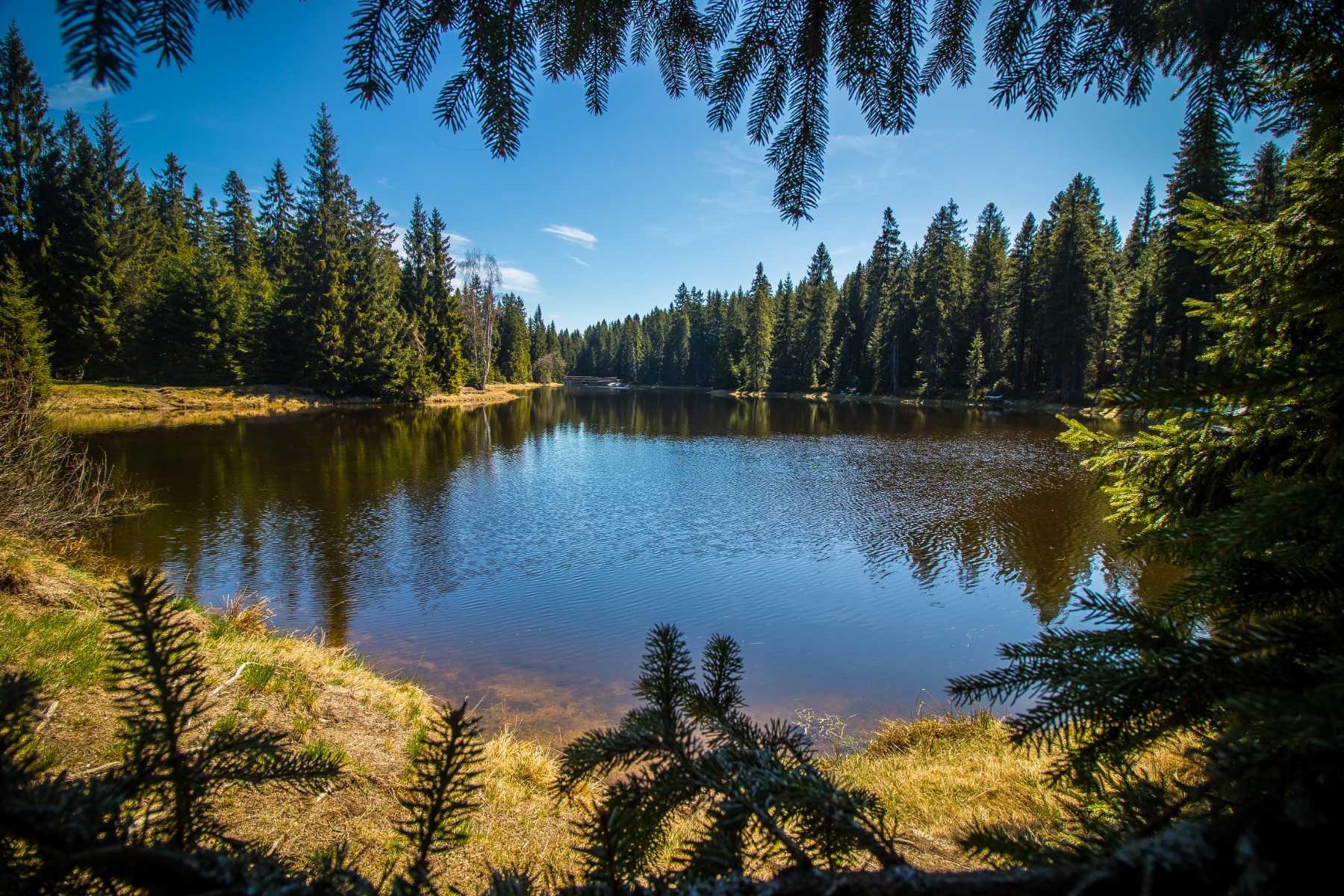 Blatný rybník poblíž Nové Louky v Jizerských horách - tmavá voda díky zdejší rašelině