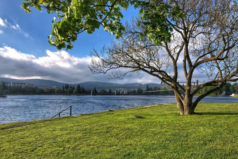 Západní břeh jablonecké přehrady Mšeno – trávník, strom, vodní plocha