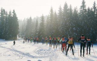 Účastníci běžkařského závodu Jizerská 50 na zasněžené trati vedoucí lesem