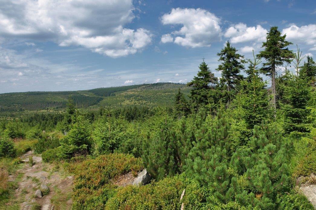 Jizerské hory - pohled na zelenou krajinu