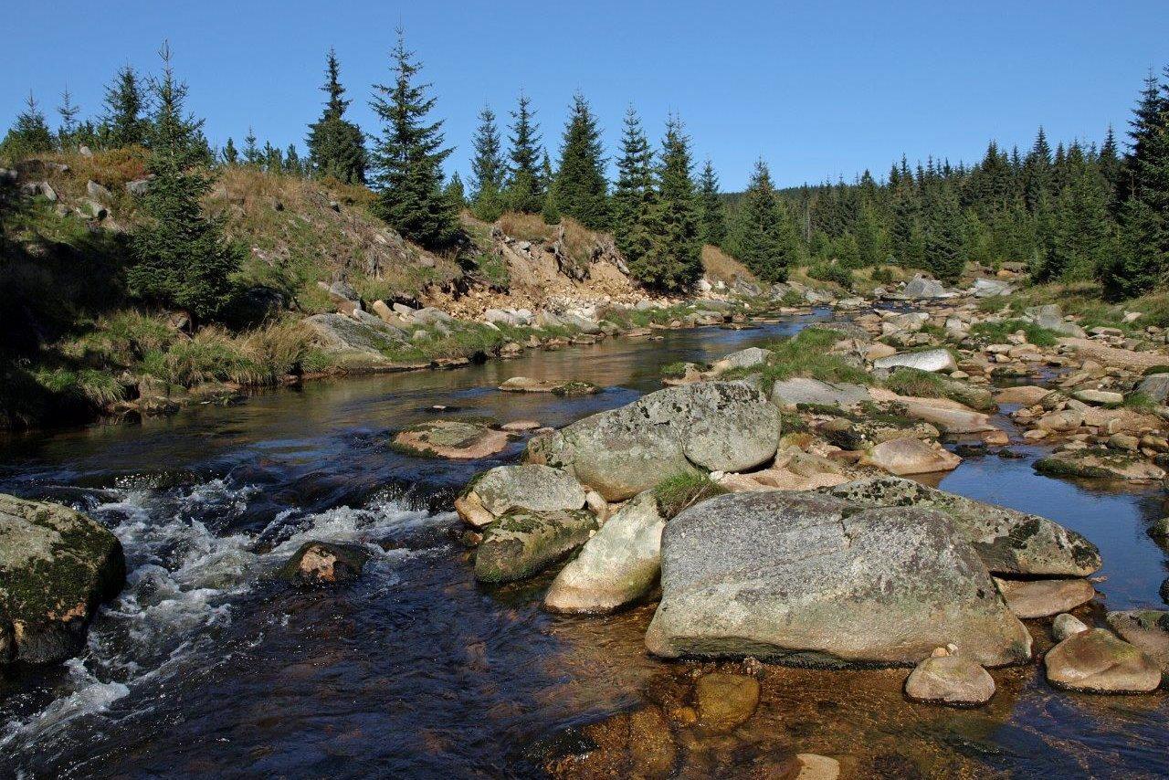 Řeka Jizera - horní tok s kameny protékající lesy Jizerských hor
