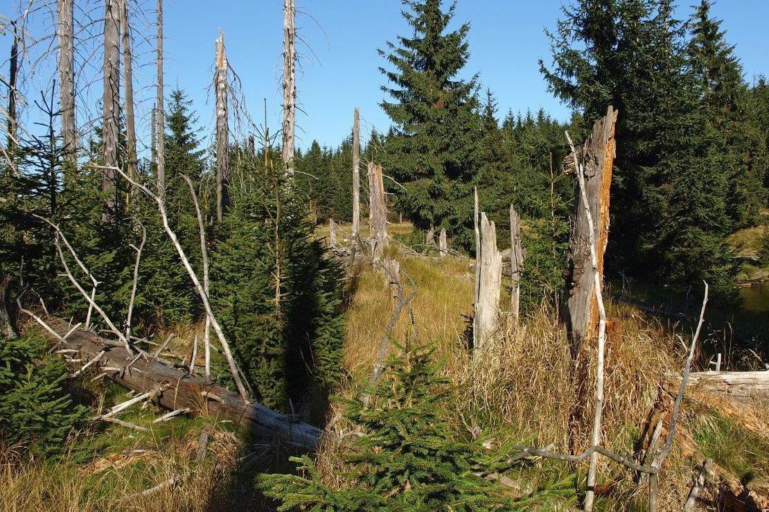 Polomy stromů v Jizerských horách