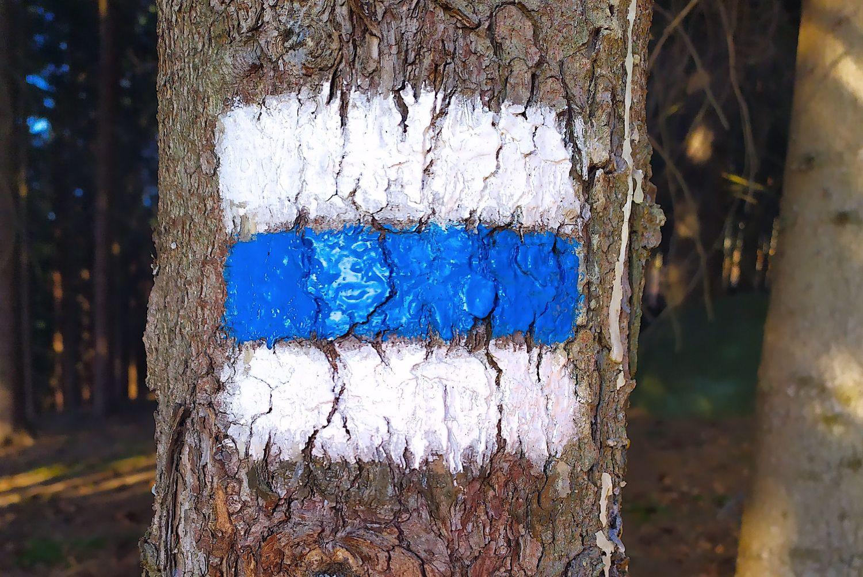 Modrá turistická značka na stromě
