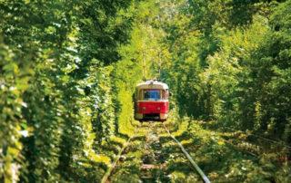 Starší typ tramvaje jedoucí lesem na trati Liberec-Jablonec